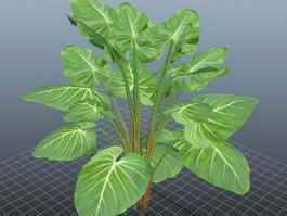 Giant Philodendron Plant 3d model preview
