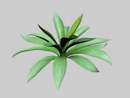 Agave Century Plant 3d model preview