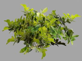 Tree Branches with Leaves 3d preview