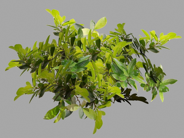 Tree Branches with Leaves 3d rendering