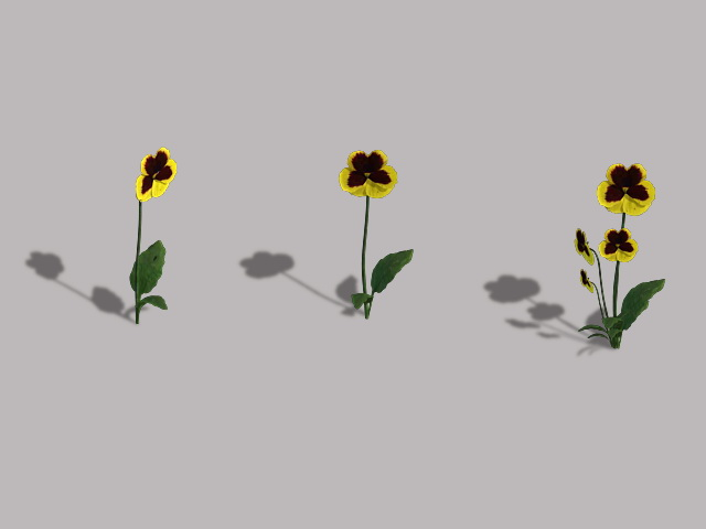 Yellow Pansy Flowers 3d rendering