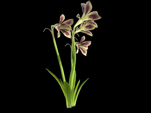 Hippeastrum Papilio 3d rendering