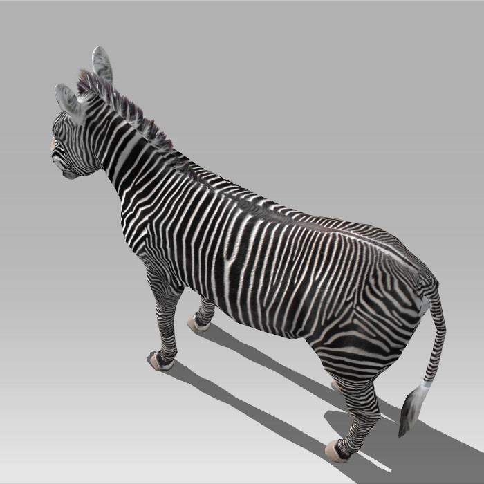 Zebra Rig & Animated 3d rendering