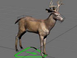 Buck Deer Rig 3d model preview