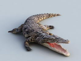 Animated Crocodile Rig 3d preview
