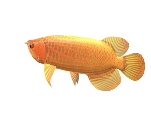 Asian Red Arowana 3d rendering