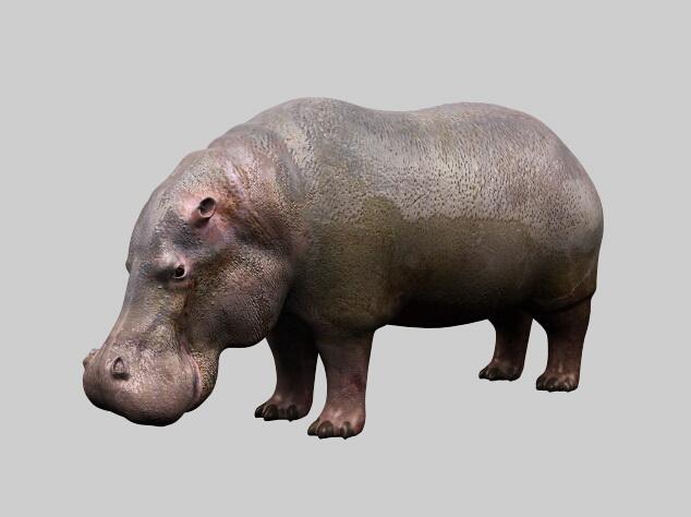 Fat Hippopotamus 3d rendering