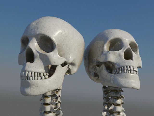 Human Skull 3d rendering
