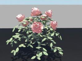 China Rose Bush 3d preview