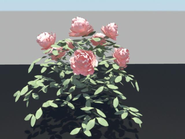 China Rose Bush 3d rendering