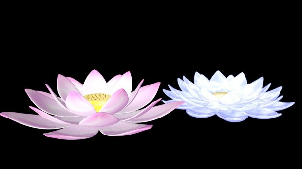 Water Lily Flowers 3d rendering
