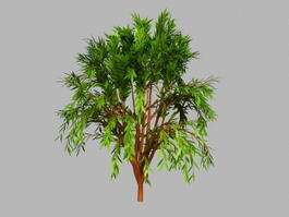 Small Willow Tree 3d preview
