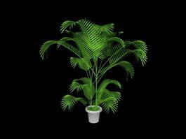 Potted Palm Plants 3d preview