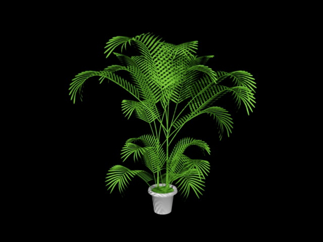 Potted Palm Plants 3d rendering