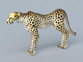 Mountain Leopard 3d model preview