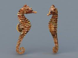 Common Seahorse 3d preview