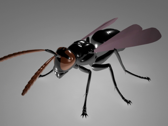 Fly Insect Rig 3d rendering