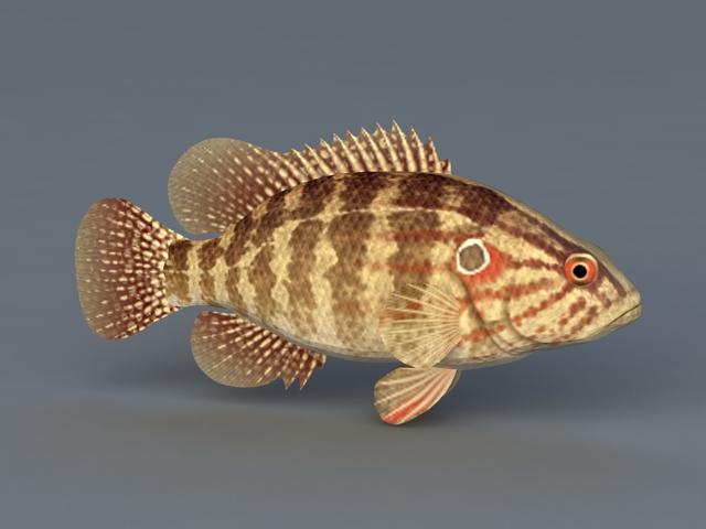 Coreoperca Fish 3d rendering