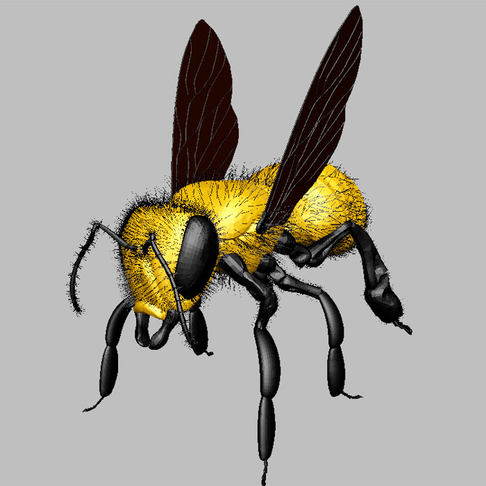 Yellow Fly 3d rendering