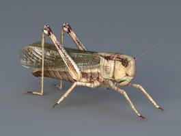 Adult Grasshopper 3d preview