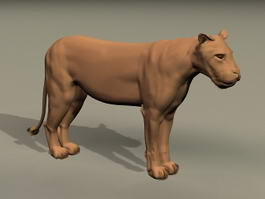 African Lioness 3d model preview