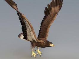 Bald Eagle Rig 3d model preview