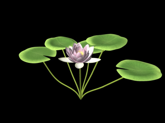 Water Lily Flower 3d rendering