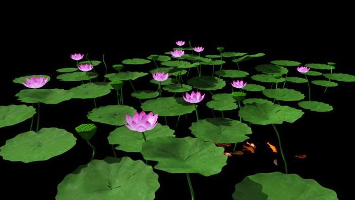 Pink Lotus Flowers 3d rendering