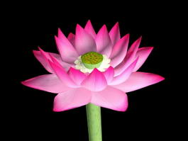 Pink Lotus Flower 3d preview