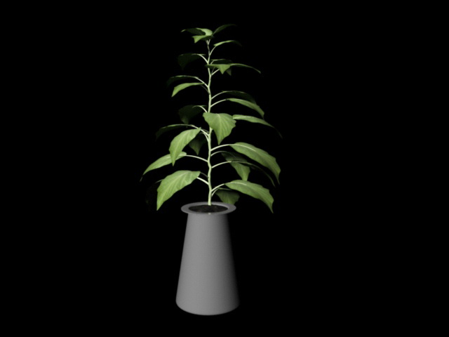 Broad Leaf House Plant 3d rendering
