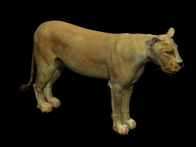 Mountain Lion 3d rendering