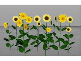 Sunflower Plant 3d preview