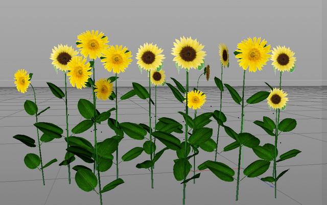 Sunflower Plant 3d rendering