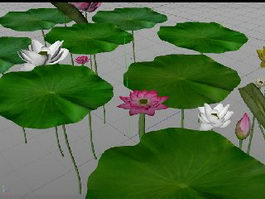 Lotus Flowers and Green Leaves 3d preview