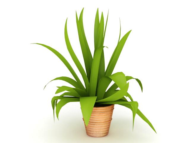 Green Leaf Indoor Plant 3d rendering