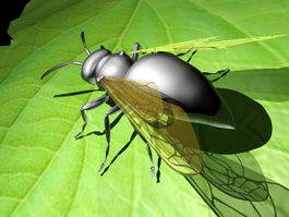 Flying Ant 3d model preview