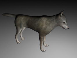 Grey Wolf 3d preview