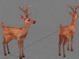 Sika Deer 3d model preview