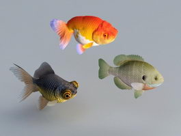Goldfish Aquarium Fish 3d preview