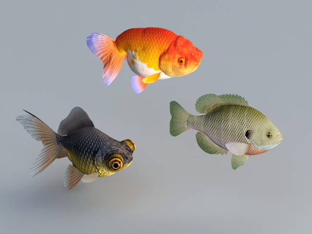 Goldfish Aquarium Fish 3d rendering