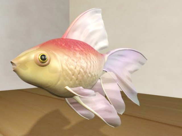 Veiltail Goldfish 3d rendering