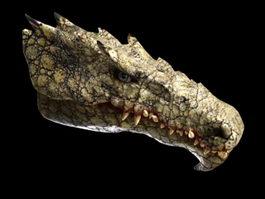 Dragon Head 3d model preview