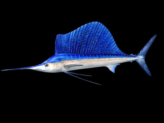 Blue Swordfish 3d rendering