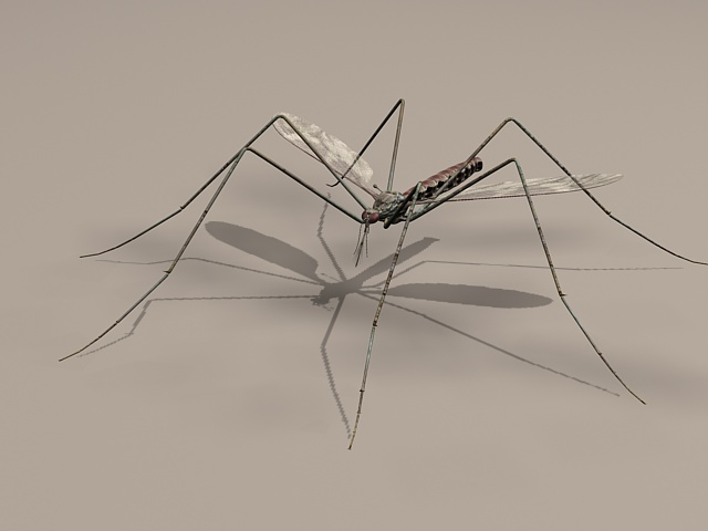 Male Mosquito 3d rendering