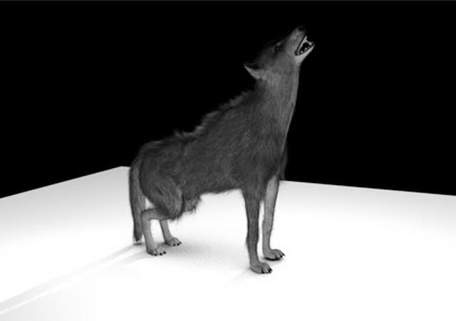 Black Wolf Rig 3d rendering