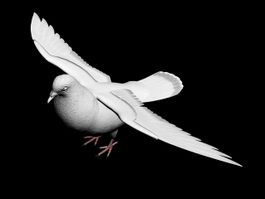 White Pigeon 3d preview
