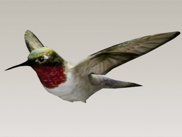 Hummingbird 3d rendering