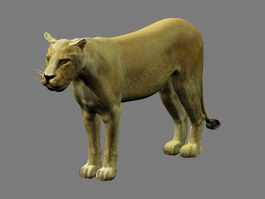 African Lioness 3d preview