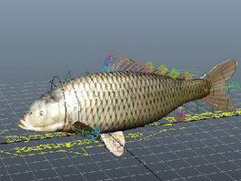 Carp Fish Rig 3d preview