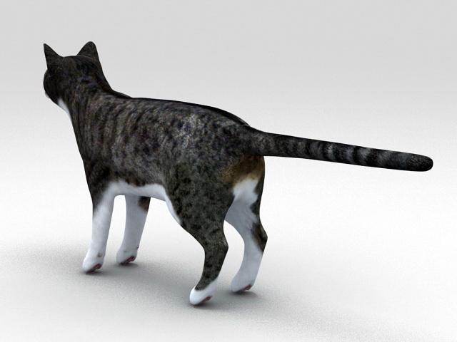 Classic Tabby Cat 3d rendering